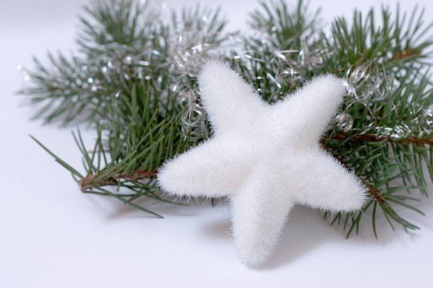 Noel- Jingle Bells