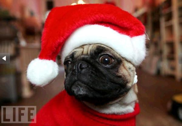 Động vật cũng vui với lễ Giáng sinh
