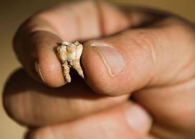 Phát hiện chiếc răng người 400.000 năm tuổi