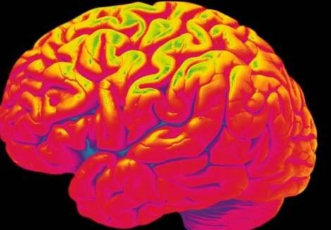 Phát hiện hàng trăm protein gây bệnh não