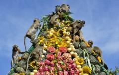 Thái Lan mở tiệc thết đãi khỉ