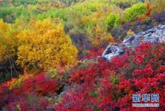 Thu quyến rũ ở Trung Quốc