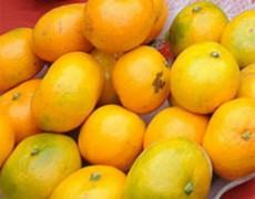 Thượng Hải ngừng bán cam nhuộm phẩm độc
