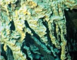 Các phân tử gỉ sắt là nhà ở của rất nhiều loại vi khuẩn. Ảnh: BBC.