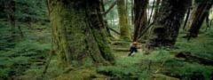 'Tội ác rừng xanh' giành giải cao nhất LHP môi trường