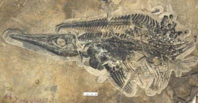 Trung Quốc phát hiện 'kho báu' hóa thạch 20.000 năm - Tin180.com (Ảnh 1)