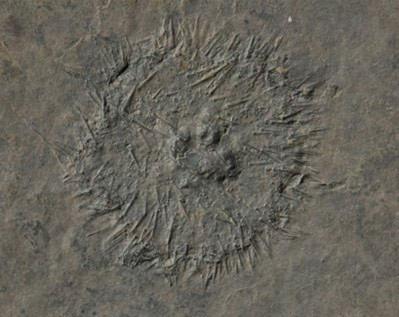 Trung Quốc phát hiện 'kho báu' hóa thạch 20.000 năm - Tin180.com (Ảnh 3)