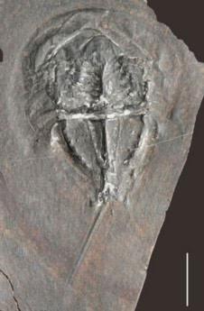 Trung Quốc phát hiện 'kho báu' hóa thạch 20.000 năm - Tin180.com (Ảnh 5)