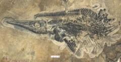 """Trung Quốc phát hiện """"kho báu"""" hóa thạch 20.000 năm"""