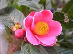 Vẻ đẹp của Hoa Hải Đường