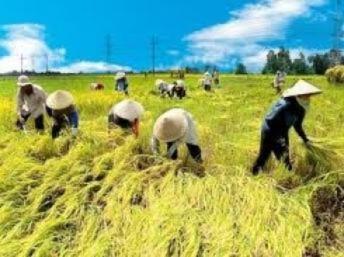 Việt Nam có nguy cơ tụt hậu so với các láng giềng
