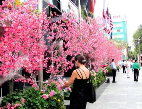Những nhánh hoa đào trước một tòa nhà công sở được trưng bày tạo không khí ngày xuân.