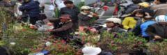 Hà Nội dự kiến tổ chức 50 chợ hoa xuân