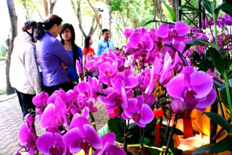 Nhiều người thích thú ngắm nghía loài hoa đẹp. Ảnh: Tá Lâm.