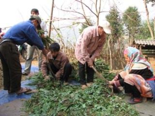 Lào Cai: Dồn sức chống rét cho gia súc