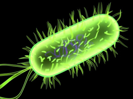 Lưu trữ thông tin trên vi khuẩn