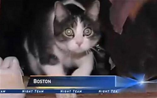 Mèo được gọi tới tòa