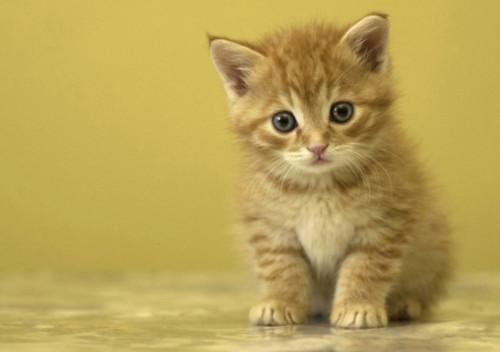 """Năm mèo và kỷ lục của """"meo"""""""