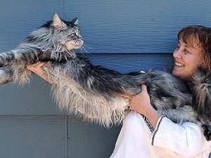 """Năm mèo và kỷ lục của """"meo"""", Phi thường - kỳ quặc, chuyen la, chuyen la the gioi, ky luc, ky luc the gioi, ky luc ve meo, nam 2011, nam meo vang"""