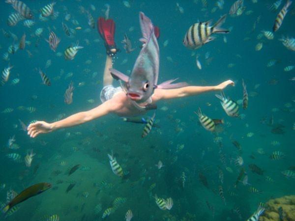 Hình ảnh độc đáo này được lại dưới vùng biển ở Koh Tao, Thái Lan. Thoạt nhìn bức ảnh này, nhiều người tưởng đây là một sinh vật thân người đầu cá. Ảnh: Nick Kelly.