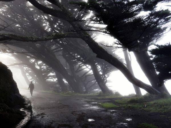 Hình ảnh ở Point Reyes, California (Mỹ) trong sương sớm - Ảnh: Anton Barmettler