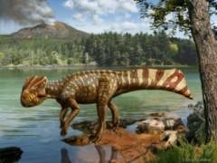 Koreaceratops hwaseongensis
