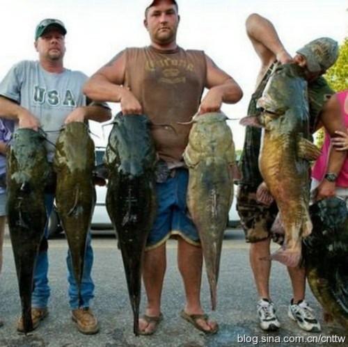 Tay không bắt cá khổng lồ