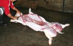 Thịt lợn Việt Nam cũng nhiễm độc gây ung thư