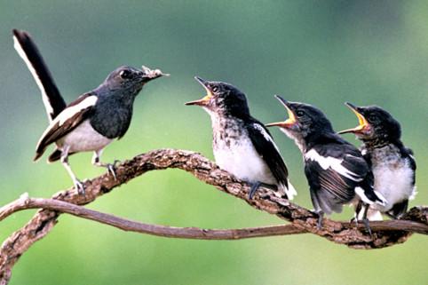 Tiếng chim giúp trẻ em phục hồi sức khỏe nhanh