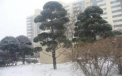 Trẻ em mê tuyết trắng tại Hàn Quốc