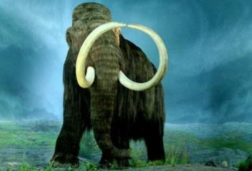 Voi ma mút lông xoăn tuyệt chủng sẽ trở lại trái đất?