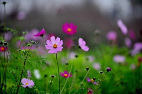 Vườn hoa xuân Hà Nội trong giá rét
