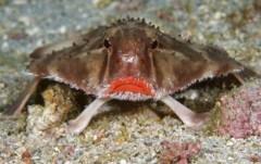 Chiêm ngưỡng vẻ đẹp các động vật biển