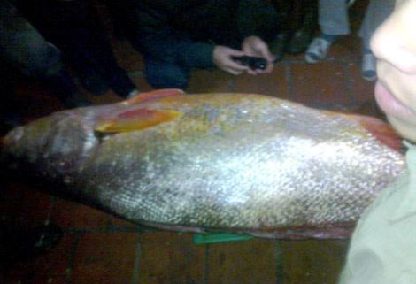 Gặp lão ngư tóm 700 con sủ vàng bạc tỉ