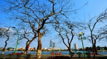 Hà Nội mùa cây trụi lá