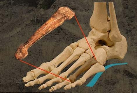 Loài người đi hai chân từ khi nào?