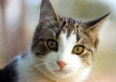 Mèo là thuốc phòng bệnh hen suyễn cho trẻ