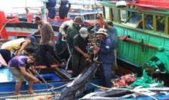 Ngư dân trúng cá ngừ đại dương đầu năm