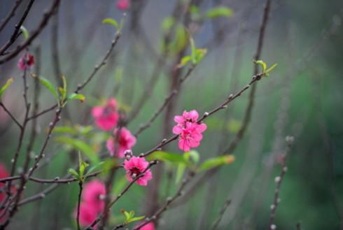 Những giai điệu bất hủ về mùa xuân