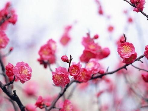 Một mùa xuân mới đang về. Ảnh: st.