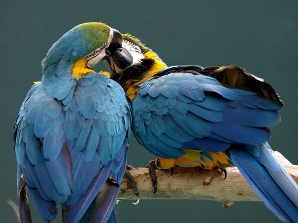 Những màn `khóa môi' nóng bỏng của động vật