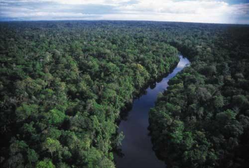 Rừng Amazon hạn hán gây biến đổi khí hậu toàn cầu