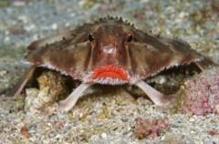 Vẻ đẹp của động vật dưới biển sâu