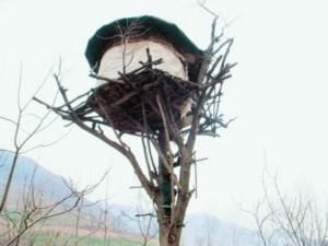 1 nông dân Trung Quốc sống trên cây hơn 20 năm