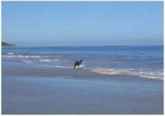 Chùm ảnh Kangaroo tự tử gây xôn xao thế giới mạng