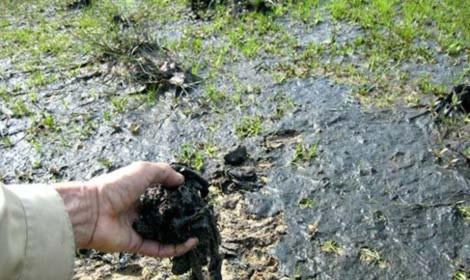 Con người đang nhuộm đen dần Trái đất - Tin180.com (Ảnh 9)