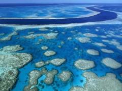 Giải cứu những rặng san hô trên toàn cầu