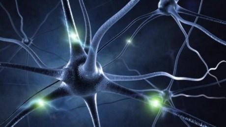 Khả năng não bộ mang tính di truyền