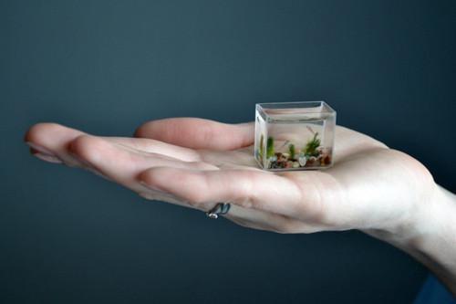 Kỷ lục thế giới: Bể cá nhỏ nhất