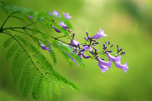Ngắm những loài hoa quý cực đẹp ở Đà Lạt